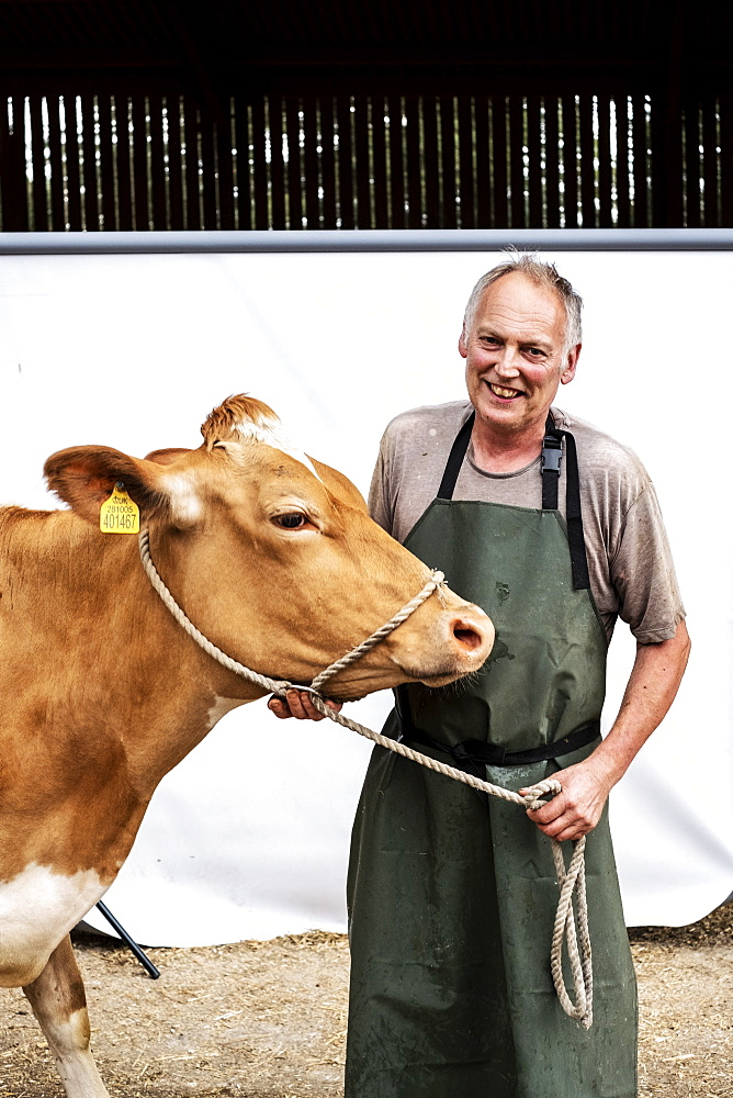 Portrait of male farmer wearing green apron smiling at camera with a Guernsey cow