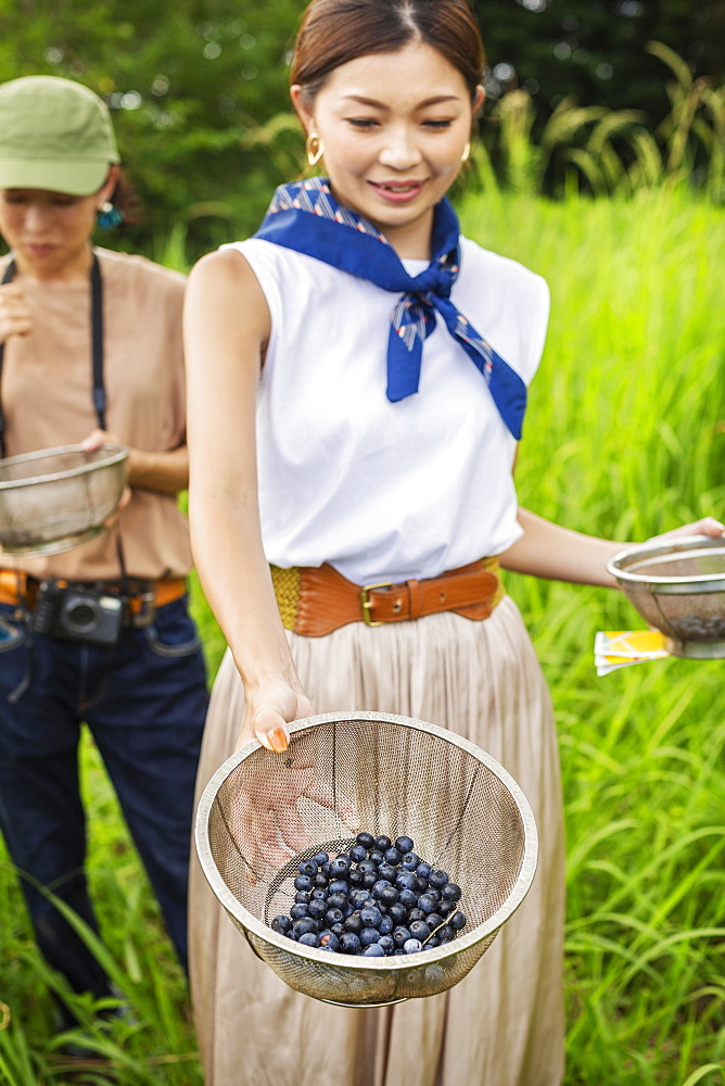 Two Japanese woman picking berries in a field, Kyushu, Japan