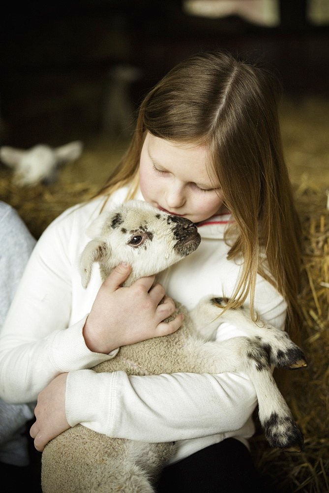 A girl holding a small new-born lamb, Wimborne, Dorset, England - 1174-776