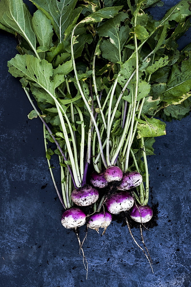 High angle close up of a bunch of freshly picked pink turnips on grey background, Oxfordshire, United Kingdom - 1174-7853