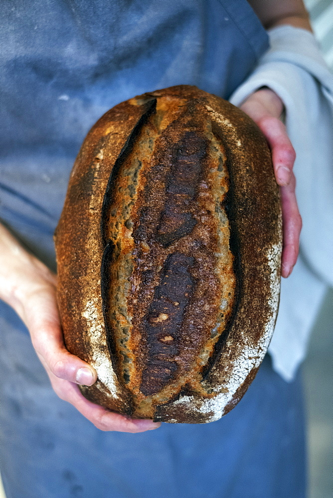 High angle close up of person holding freshly baked loaf of bread in an artisan bakery. - 1174-8001