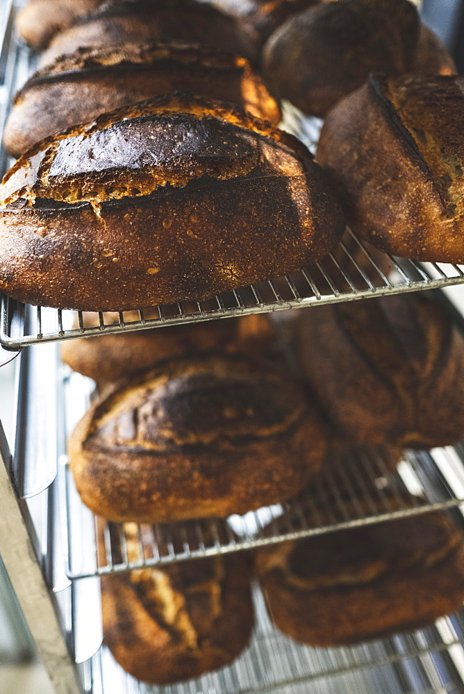 Artisan bakery making special sourdough bread, racks of baked bread with dark crusts
