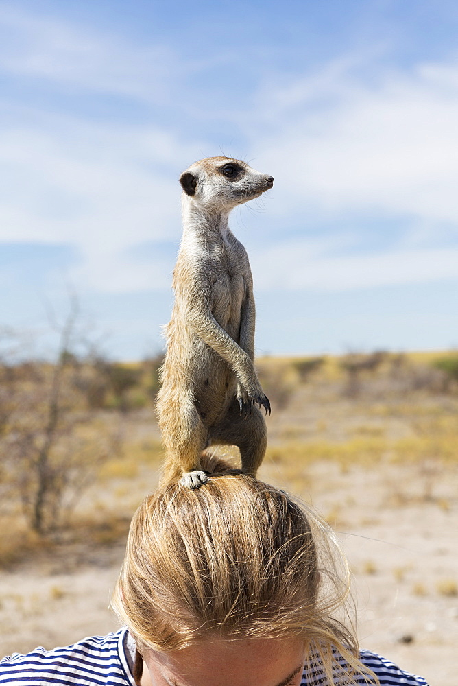 12 year old girl with Meerkat on her head, Kalahari Desert, Makgadikgadi Salt Pans, Botswana