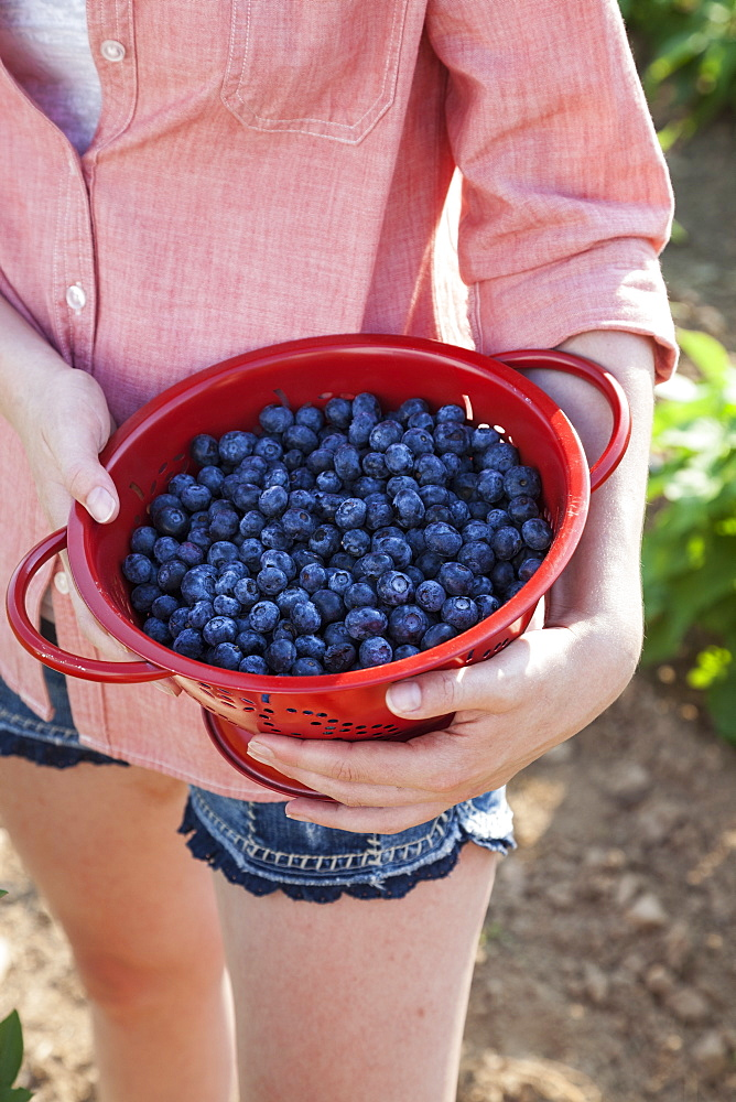 A girl in a pink shirt holding a large bowl of harvested blueberry fruits, Maryland, USA