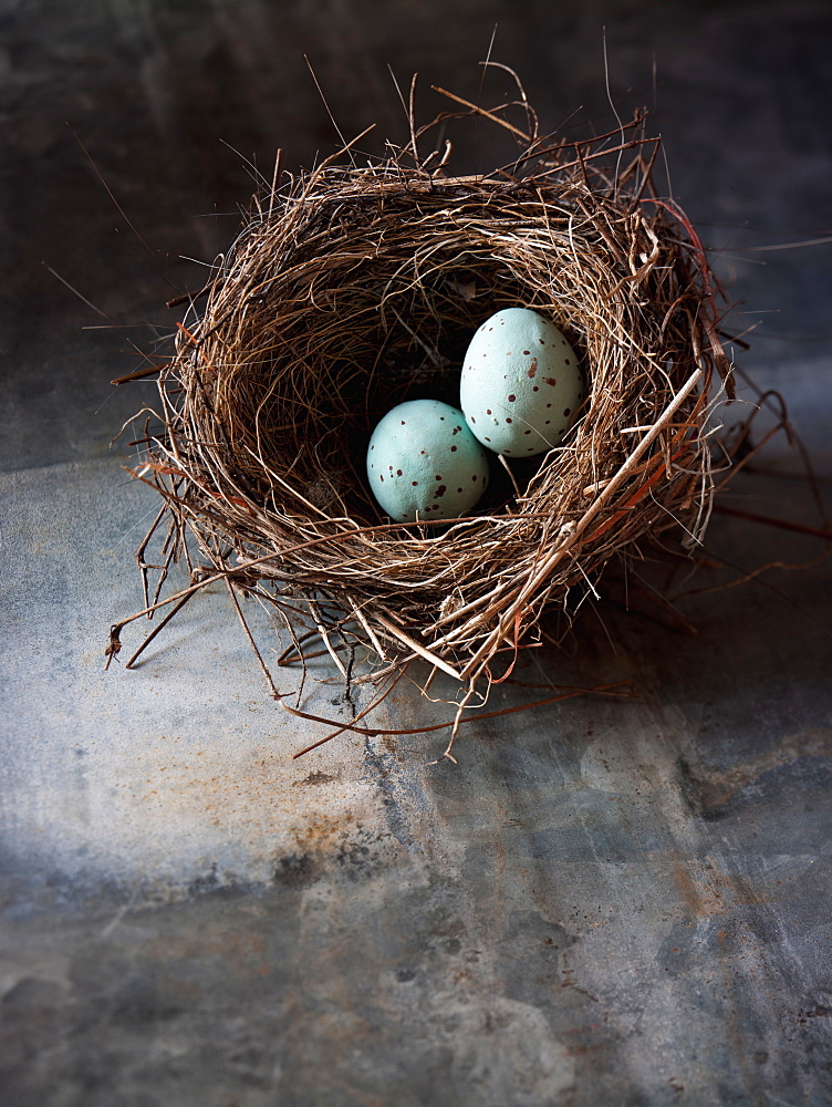 A small intricately woven bird's nest. Two small turquoise eggs, Maryland, USA