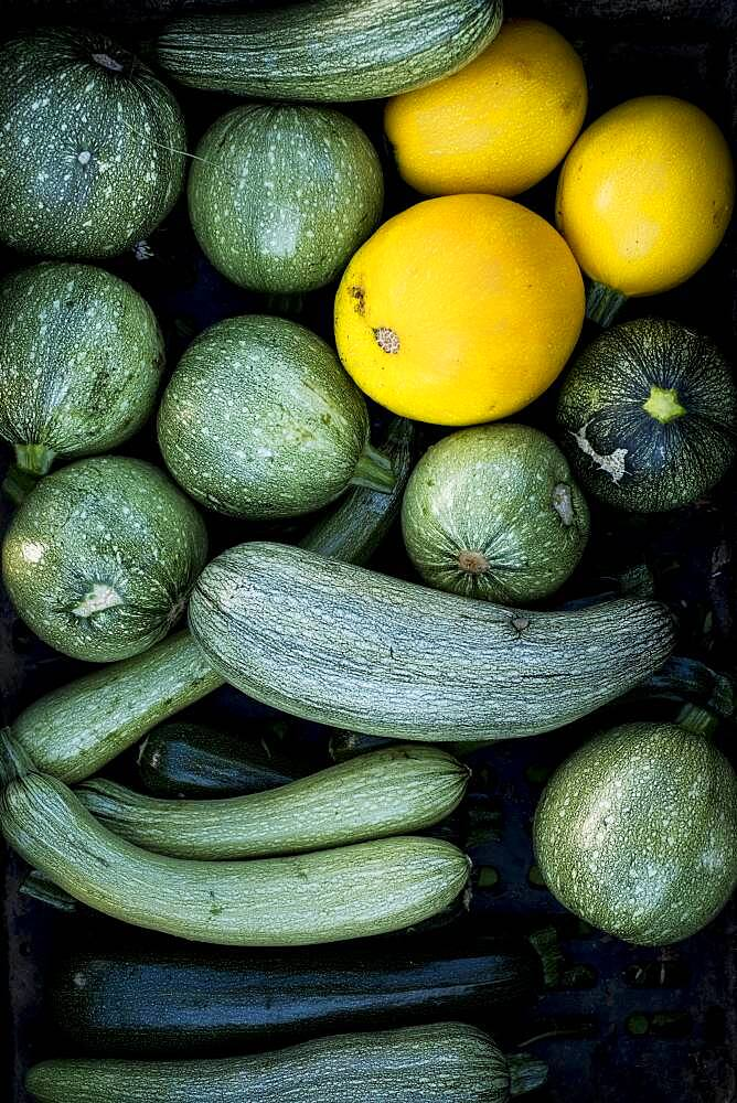 High angle close up of freshly picked yellow and green marrows and courgettes, Oxfordshire, United Kingdom - 1174-9886