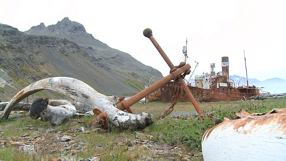 Whale bones and old rusting whaling ship, Grytviken Whaling Station. South Georgia Island - 1034-1031