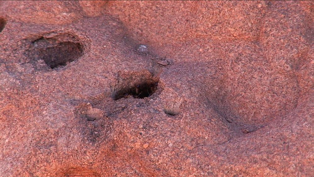 Termite mound. Australia - 945-385