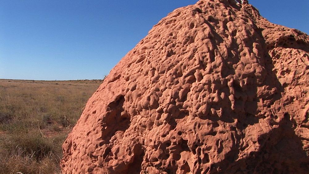 Termite mound. Australia - 945-388