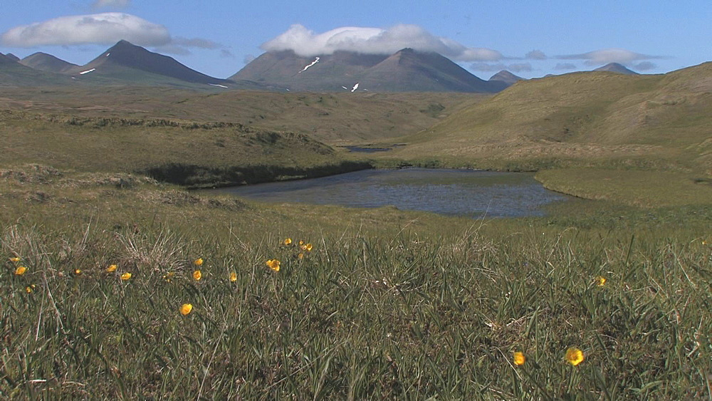 Mountains with flowers in foreground.  Aleutian Islands. Alaska