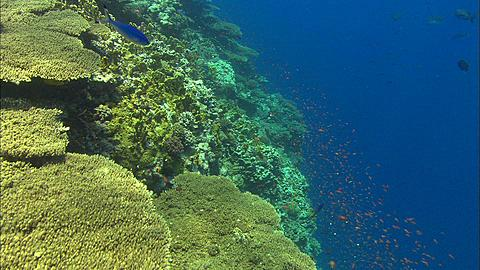 Reef, edge, Egypt, Red Sea