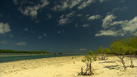 Scenic, beach, mangroves,  Aldabra, Indian Ocean