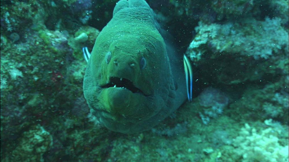 Moray eel, Saudi Arabia, Middle East