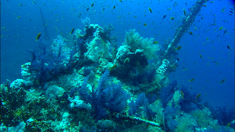 Wreck, soft coral, hard coral, anthias, track, Saudi Arabia, Middle East