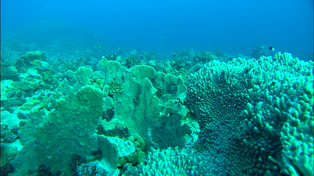 Coral reef, track, Europa Island and Bassas Da India, Indian Ocean, Africa