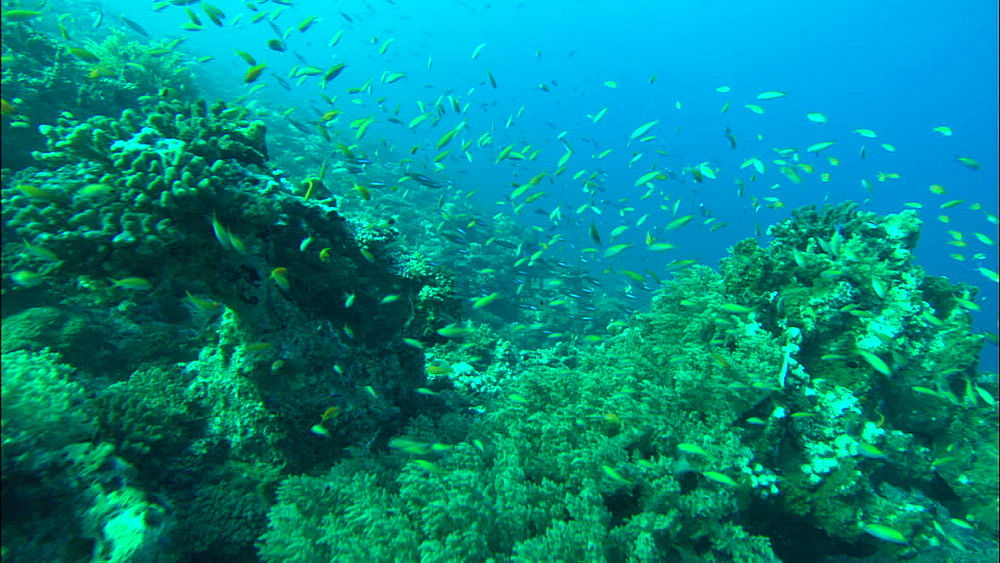 Coral reef, track down side, Europa Island and Bassas Da India, Indian Ocean, Africa