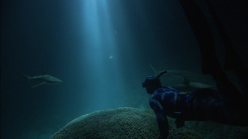 Diver with camera, Galapagos sharks (Carcharhinus galapagensis), silhouettes, rays of light on reef, night filming, Europa Island and Bassas Da India, Indian Ocean, Africa