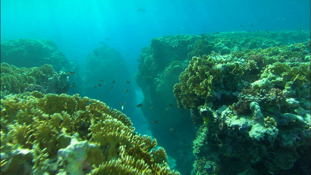 Coral reef, shallow, track over coral, small underwater canyon, Europa Island and Bassas Da India, Indian Ocean, Africa