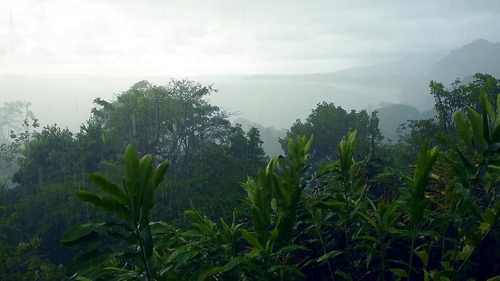 Tropical rain storm on the Pacific Coast of Costa Rica, close to Uvita, Costa Rica, Central America