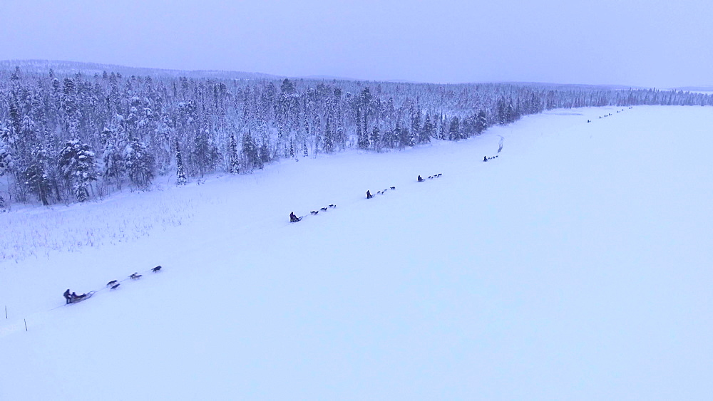 View by drone of dog sledding on Torassieppi Lake covered in snow in winter, Finnish Lapland, Finland, Europe
