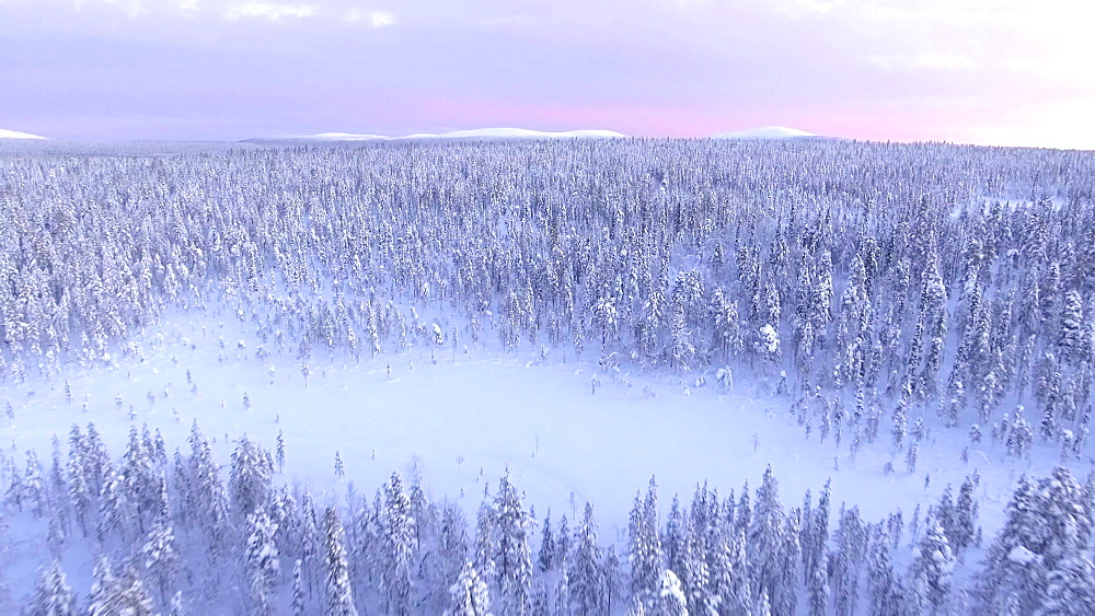 View by drone of snowy winter landscape of trees, forest and fells, Torassieppi, Finnish Lapland, Finland, Europe