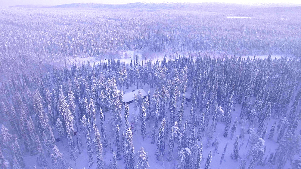 View by drone of lone cabin in the snow covered landscape of Finnish Lapland in winter, Finland, Europe