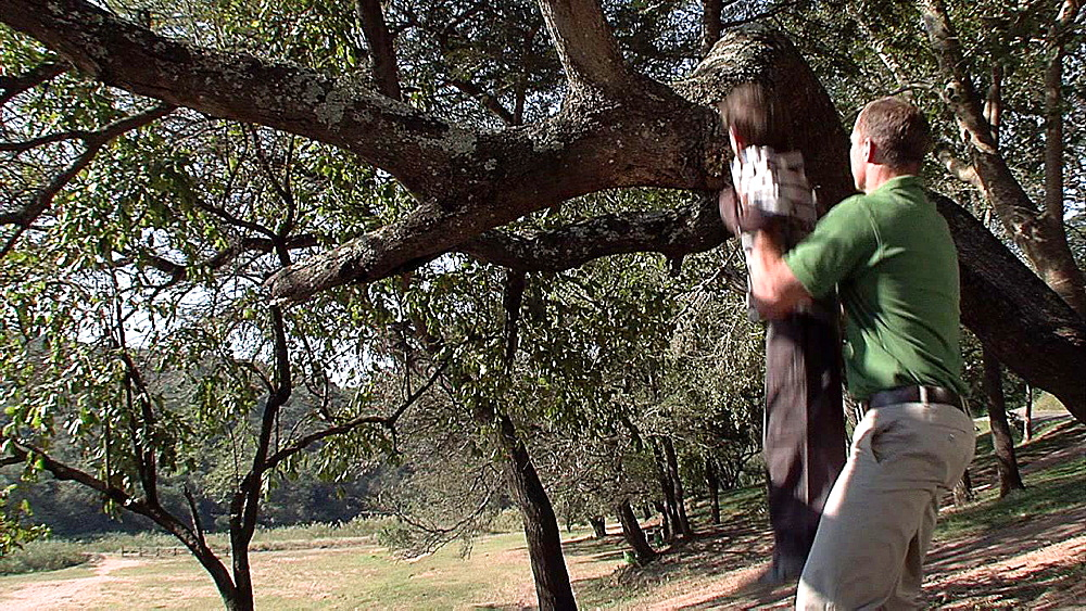 Man wearing a green Tshirt lifting a young child into a tree - 1114-1553