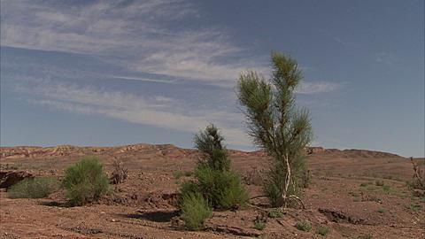 Desert plants, Tianjiang Desert, Xinjiang, China