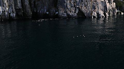Tilt up from water to reveal huge bird cliffs in great light, Antarctica - 1159-1104