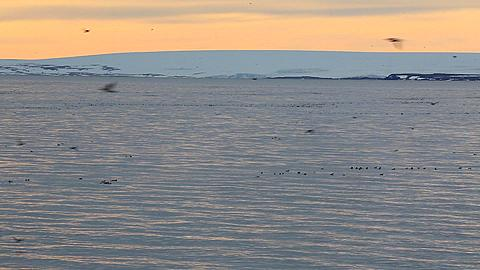 Wide with move to show sea and landscape with guillemots and other sea birds flying and rafting, Antarctica
