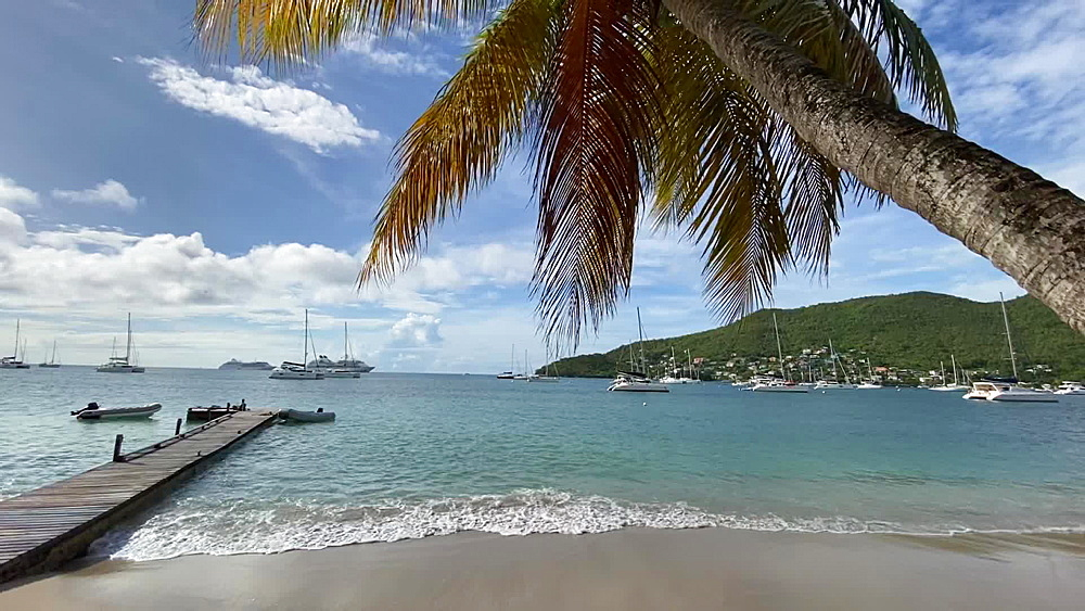 Calm waters lapping on beach, overhanging palm tree, Port Elizabeth, Bequia, St. Vincent and the Grenadines, West Indies, Caribbean, Central America