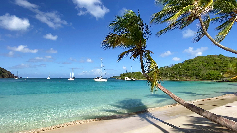 Yachts in aquamarine Saltwhistle Bay, overhanging palm trees, white sand beach, gentle breeze, Mayreau, Grenadines, West Indies, Caribbean, Central America