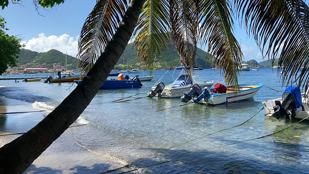 Tropical Les Saintes bay, small boats, palm tree, swimming, Terre de Haut island, Iles des Saintes, Guadeloupe, West Indies, Caribbean, Central America