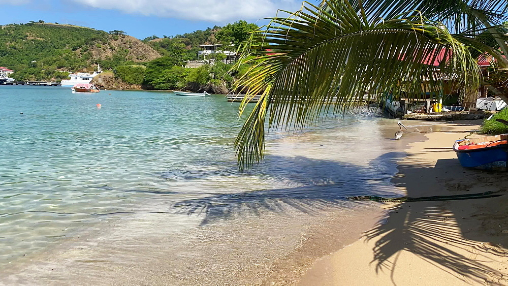 Pelican on the beach, tropical Les Saintes bay, Terre de Haut island, Iles Des Saintes, Guadeloupe, West Indies, Caribbean, Central America