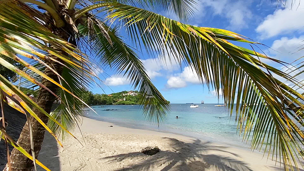 Swimming and snorkelling, seen through a palm tree, Trois Ilets, Martinique, West Indies, Caribbean, Central America