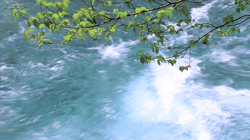 Mountain water stream and green leaves - 1172-1023