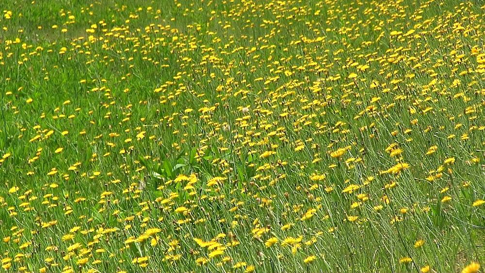 Flower field - 1172-1034