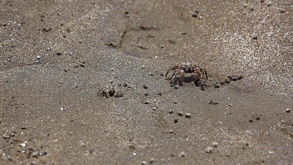 Crabs on the beach at Daiba Park, Tokyo, Japan - 1172-1095
