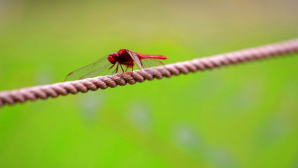 Dragonfly close-up at Showa Memorial Park, Tokyo, Japan - 1172-1219