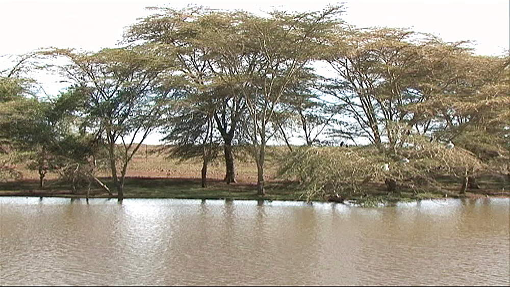 Watering hole, small dam, body of water in Kenya, Africa - 1182-140