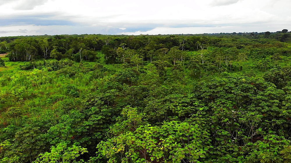 Aerial shots of the Delfin III Luxury Riverboat and the Amazon Forest and River