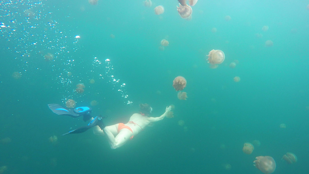 Jelly Fish Lake ? Go Pro Underwater Snorkeling with jellyfish - 1218-947