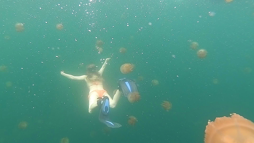 Jelly Fish Lake ? Go Pro Underwater Snorkeling with jellyfish - 1218-960