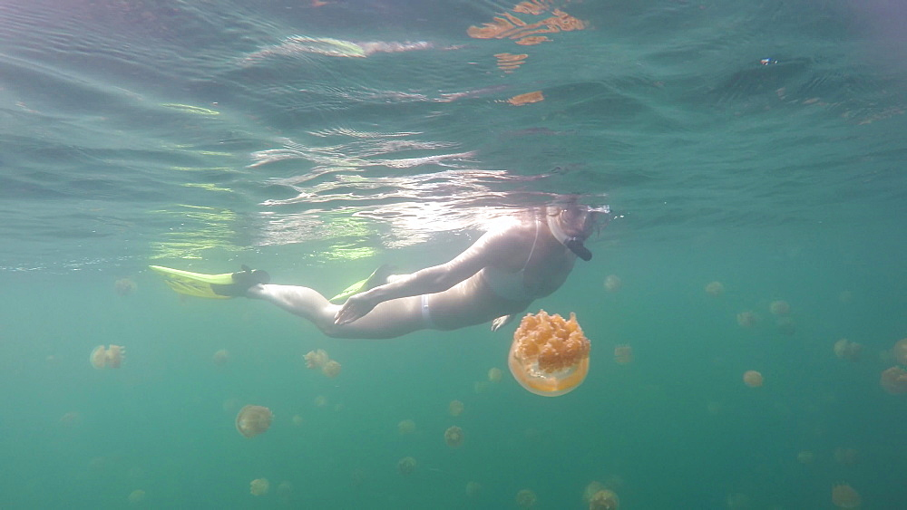 Jelly Fish Lake ? Go Pro Underwater Snorkeling with jellyfish - 1218-961