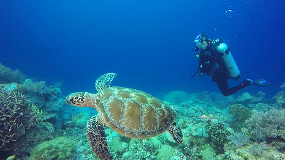 Jelly Fish Lake ? Go Pro Underwater Snorkeling with jellyfish - 1218-969