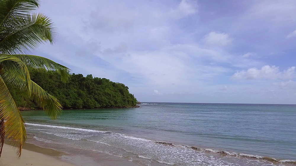 La Sagesse Beach with Palm Tree, Grenada, Caribbean, West Indies.