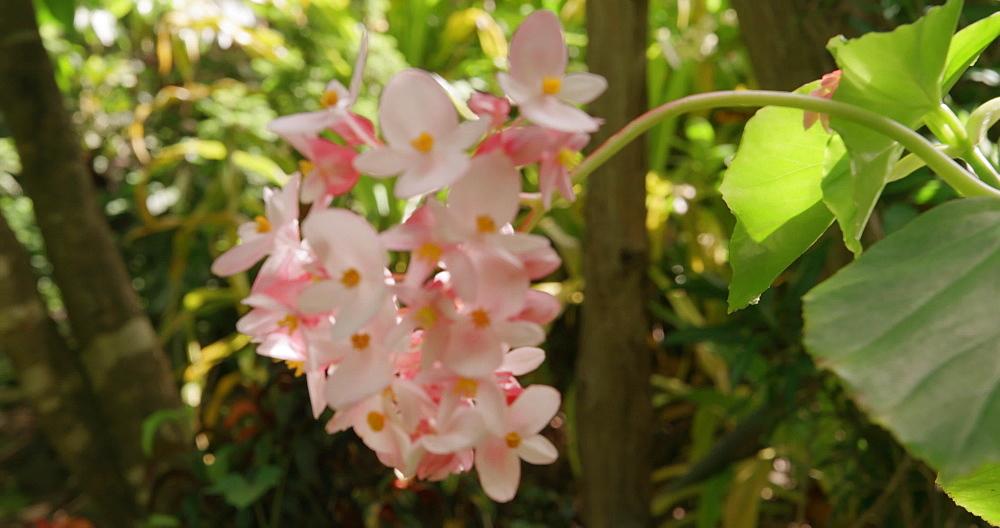 Tropical Plants, St Rose Nursery Tropical Garden, Grenada, West Indies, Caribbean