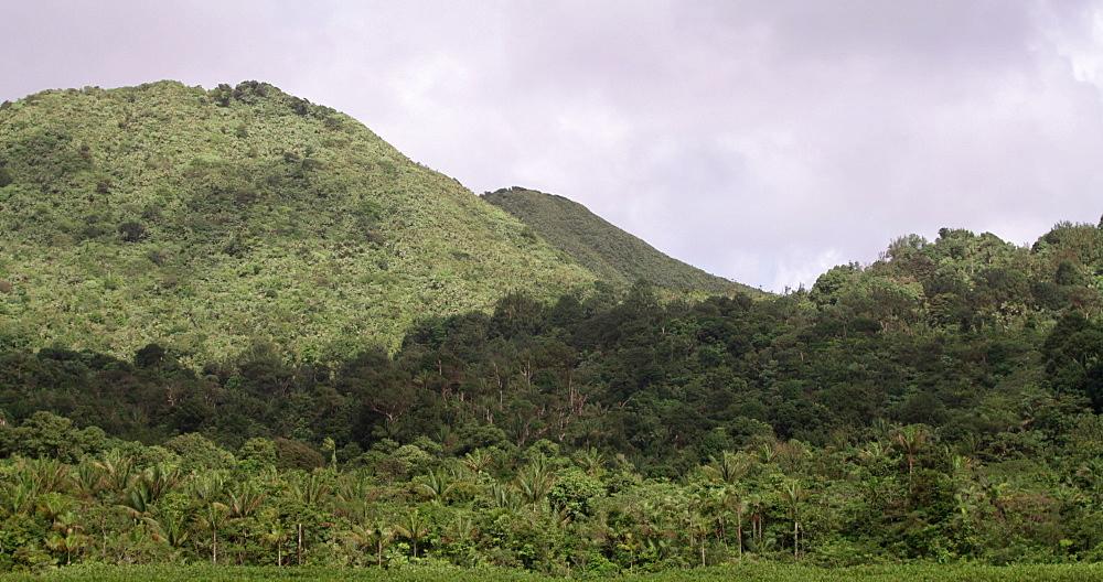 Shore of Grand Etang Volcanic Crater Lake, Grand Etang National Park, Grenada, West Indies, Caribbean