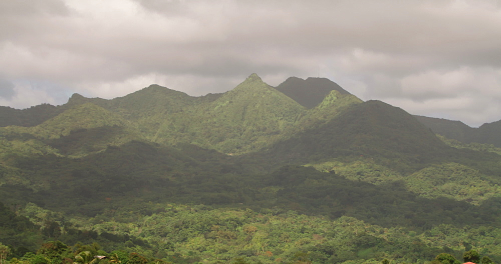 Forest and Hills, Grand Etang National Park, Grenada, West Indies, Caribbean