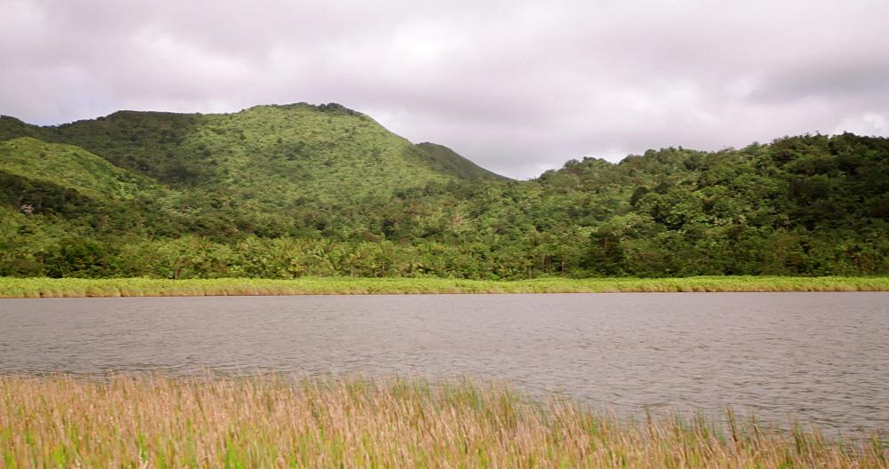 Shoreline Grand Etang Volcanic Crater Lake, Grand Etang National Park, Grenada, West Indies, Caribbean